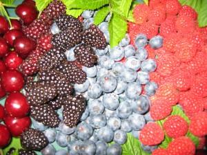 Progressive Chiropractic Surry Hills - Nutrient Density - Eating for Better Health